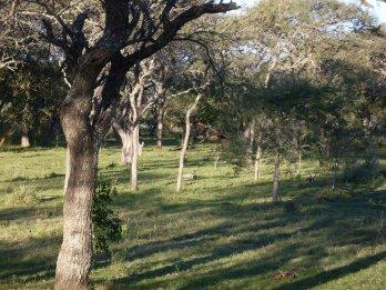hectáreas 6