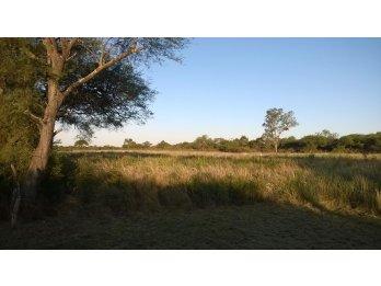 Campo mixto zona Hernandarias
