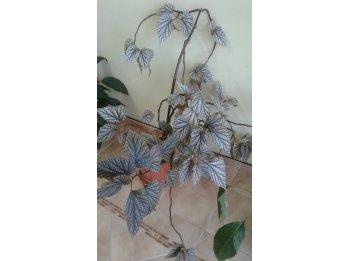 Vendo planta